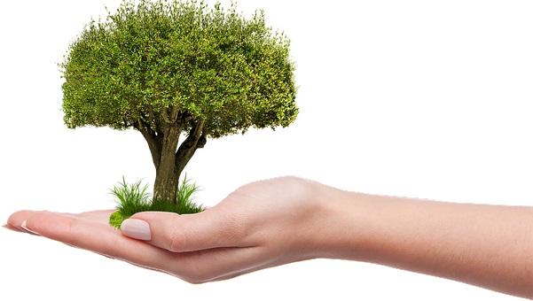 20. říjen - Den stromů