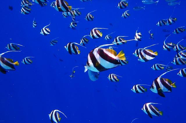 Podmořský svět na Maledivách